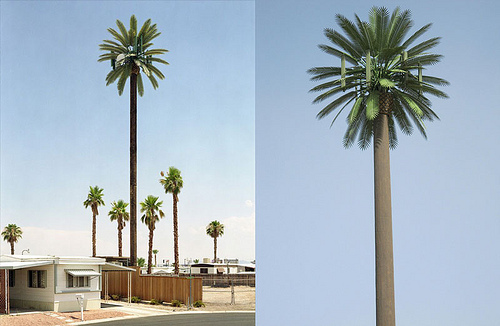 cell-phone-tower-disguised-as-a-palm-tree